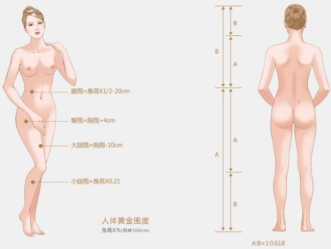美立方S形雕塑美体标准