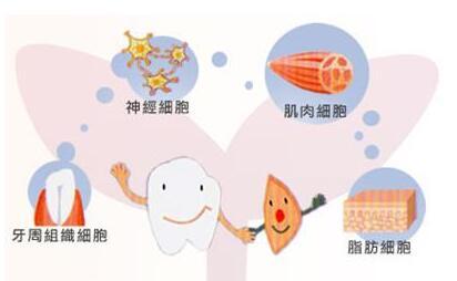 牙髓干细胞抗衰老可促进神经再生吗
