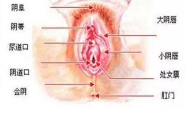 做处女膜修复后 会被看出来吗?